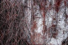 Parede oxidada do metal Fotos de Stock Royalty Free