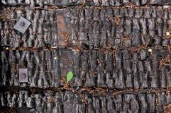 Parede queimada preta da casa de pranchas de madeira com as curvaturas gravadas da textura e do metal fundo para o espaço da cópi imagens de stock royalty free