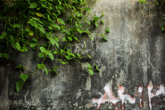 Parede rachada suja do cimento Foto de Stock