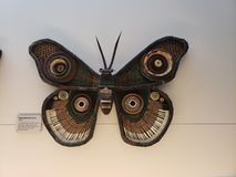 A parede recicla a borboleta fotografia de stock royalty free