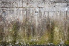 Parede textured musgo Imagens de Stock