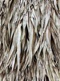 Parede vegetal das folhas de palmeira Imagem de Stock Royalty Free