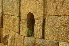 Parede velha do bloco da pedra de Brown com uma planta Imagens de Stock