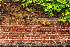 Parede velha do jardim do tijolo imagens de stock
