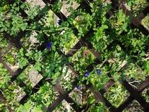 Parede verde Imagens de Stock