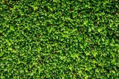 Parede verde imagem de stock