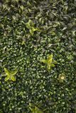 Parede verde completamente das plantas e das flores Foto de Stock