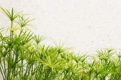 Parede verde da folha Fotos de Stock