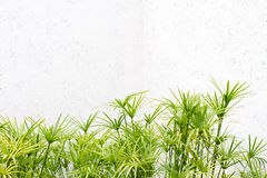 Parede verde da folha Imagens de Stock