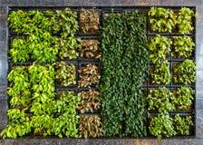 Parede verde ou jardim vertical fotos de stock royalty free