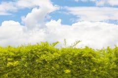 Paredes, árvores e céu azul no dia Fotografia de Stock