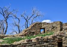 Paredes con Windows como danza desnuda de los árboles en primavera temprana Imágenes de archivo libres de regalías