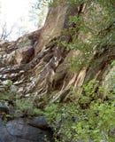 Paredes de caídas vernales Fotos de archivo