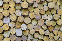 Paredes de madera Fotos de archivo