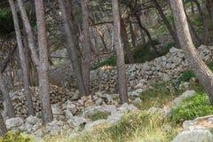 Paredes de pedra e pinheiros Imagens de Stock Royalty Free
