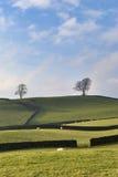 Paredes de pedra secas & árvores Foto de Stock Royalty Free