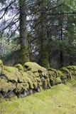 Paredes de piedra antiguas cubiertas en musgo verde Imagen de archivo libre de regalías
