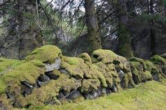 Paredes de piedra viejas cubiertas en musgo verde Fotografía de archivo libre de regalías