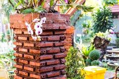 Paredes de tijolo da orquídea Fotos de Stock Royalty Free