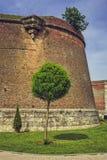 Paredes del fortalecimiento y árbol ornamental Imagen de archivo libre de regalías