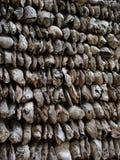 Paredes do shell de ostra Fotos de Stock Royalty Free