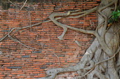 Paredes e árvores Imagens de Stock Royalty Free