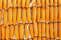 Paredes feitas do milho Foto de Stock