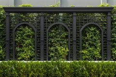 Paredes verdes das cercas, fundo vertical amigável do jardim do eco imagens de stock royalty free