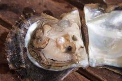 Parel binnen een oester Royalty-vrije Stock Foto's