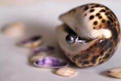 Parel en shell stock afbeeldingen