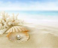 Parel in koraalrif Royalty-vrije Stock Foto's