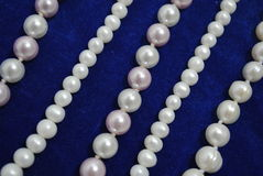 Parel op draai blauw fluweel Royalty-vrije Stock Afbeelding