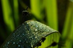 Parel op green Stock Fotografie