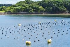 Parelrijen in de oceaan, de productie en de cultuur van parels in de oceaan Parelaqua de landbouwcultuur Shima Japan royalty-vrije stock afbeeldingen