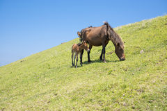 Parent and child horse Royalty Free Stock Images