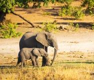 Parent d'éléphant avec le veau photographie stock libre de droits