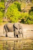 Parent d'éléphant avec le veau Photos stock
