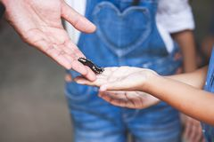 Parent give black caterpillar to daughter to touch. And learn about animal life stock photography