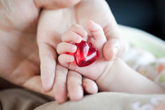 Parent's and baby's hands with heart Royalty Free Stock Image