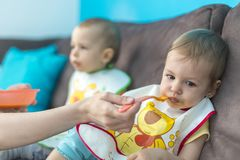 Feeding little baby twins. Parenthood concept - mother with puree and spoon feeding little baby twins at home Stock Photography