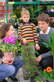 Parents with child in flower shop Stock Photography