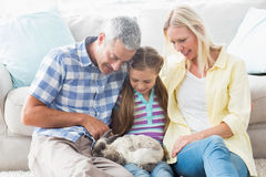 Parents and daughter playing with rabbit at home Royalty Free Stock Image