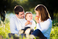 Parents holding their little son, eating apples, sunny nature Royalty Free Stock Image