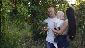 Parents show the child an apple tree stock video