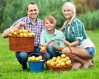 Parents and teenager with apples outdoors. Positive parents and teenager  holding basket with apples outdoors Royalty Free Stock Image