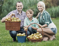 Parents and teenager with apples outdoors. Positive parents and teenager  holding basket with apples outdoors Royalty Free Stock Photo