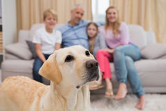 Parents and their children on sofa with labrador Royalty Free Stock Photography