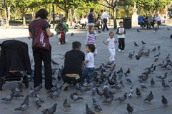 Parents with young children have fun with pigeons Stock Image