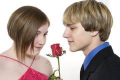 Pares adolescentes adoráveis que olham Rosa Fotos de Stock