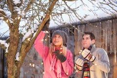 Pares adolescentes que cuelgan luces de hadas en árbol Fotos de archivo